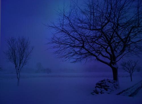 blue winter italy snow tree landscape evening italia friuli fagagna feagne