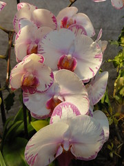 Exposition d'orchidées à la Fondation Eugène Napoléon (Mai 2011)