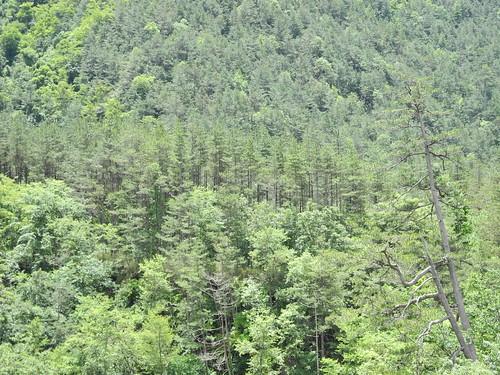 台灣森林深具價值,第四次大調查將森林土壤吸碳力納入計算。