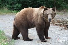 The Bears 2012