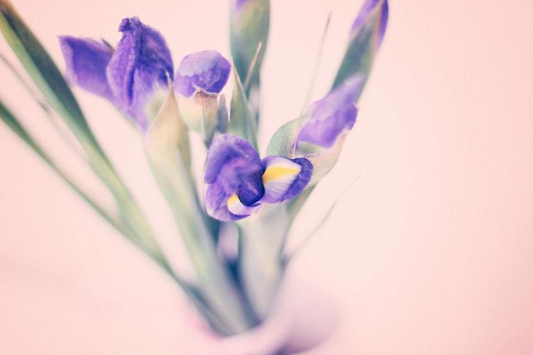 closeup iris