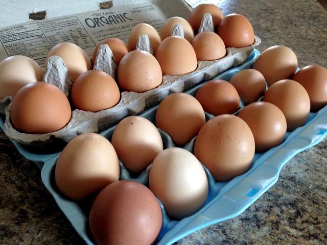 Eggs. Glorious eggs.