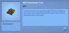 Wild Thornbucky Tree