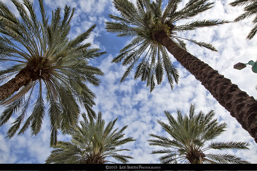 Palms against the Sky by smittysholdings