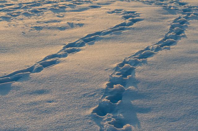 Late Winter - Tracks 2