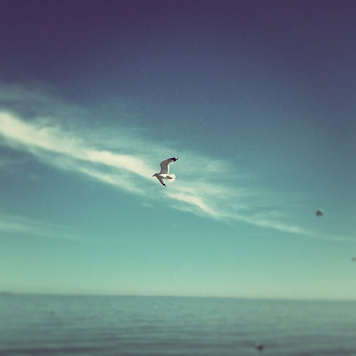 Taking flight. (The beach was beautiful.)