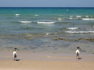 Praia de Baathela, Somalilandia