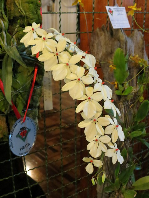 101º Exposição de Orquídeas Curitiba