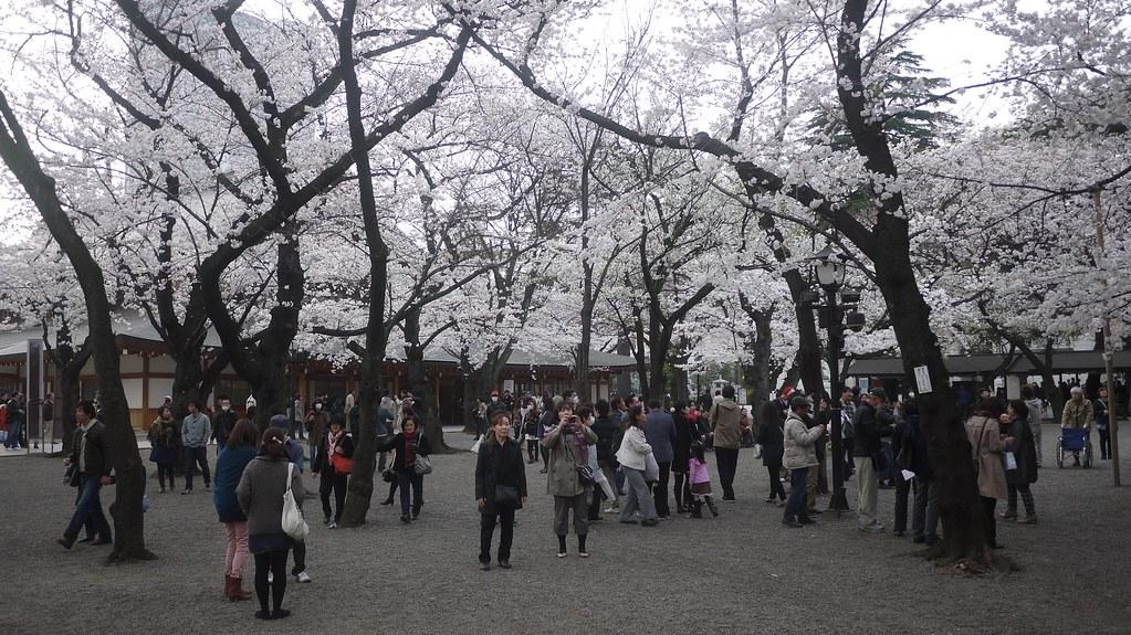 Yasukuni Hanami Watching