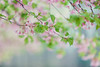 Photo:Breath of Spring By chibitomu