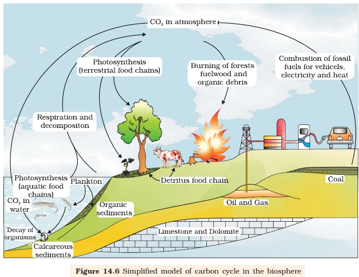 NCERT Class XII Biology Chapter 14 Ecosystem