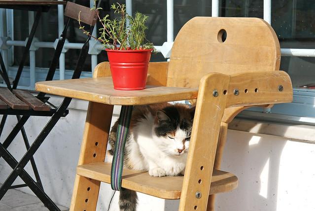 A cat napping, Istanbul, Turkey イスタンブール、昼寝するネコ