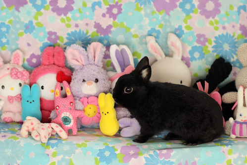 Happy Easter Outtakes by Jeni Baker