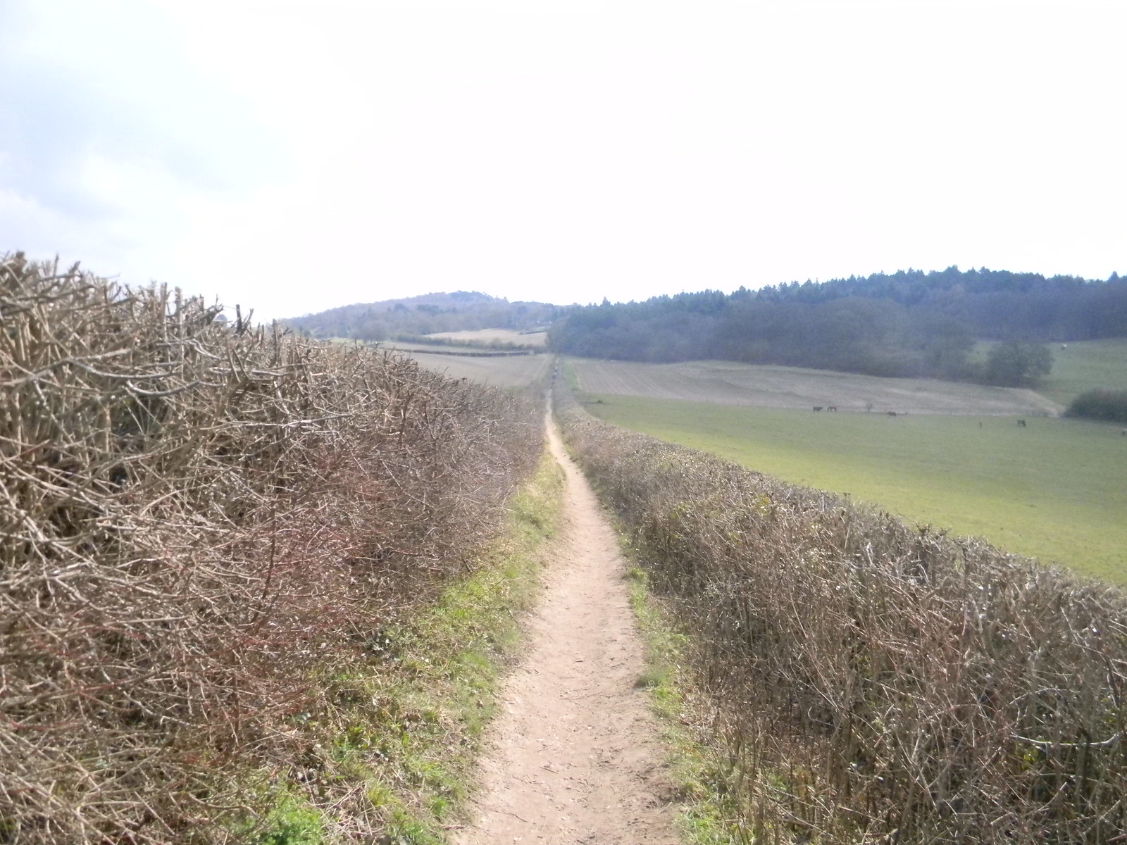 Descent from Pewley Down Guildford to Gomshall