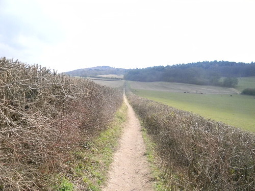 Descent from Pewley Down
