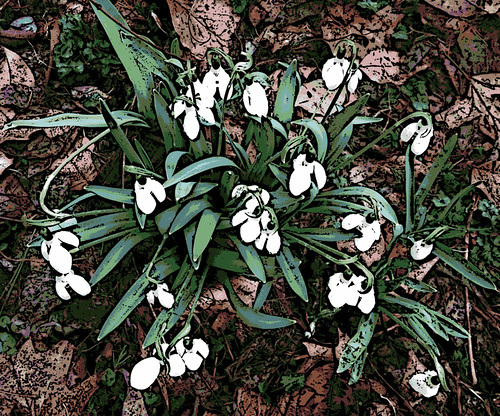 Snowdrops (Digital Woodcut) by randubnick