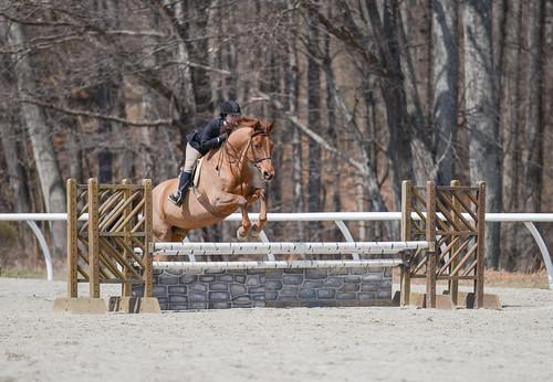 sports animal animals jumping equine equitation sweetbriarcollege ohsofine kathleendrake