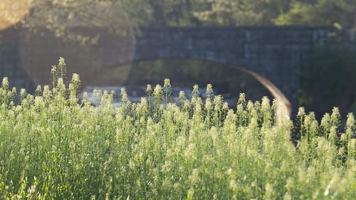 park bridge weeds nikon ky louisville seneca d3200