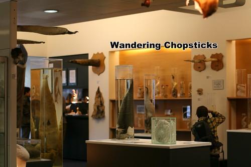 4 Icelandic Phallological Museum - Reykjavik - Iceland 41