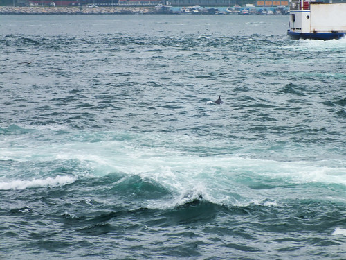 Delfinek a Boszporuszon