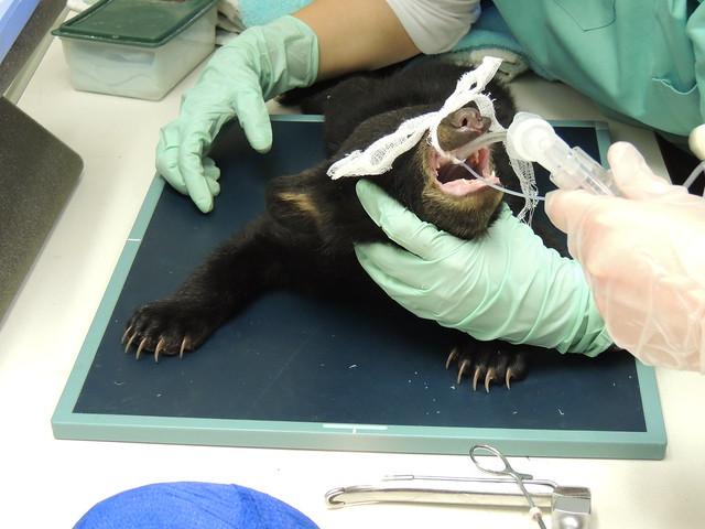 Black Bear patients of 2013