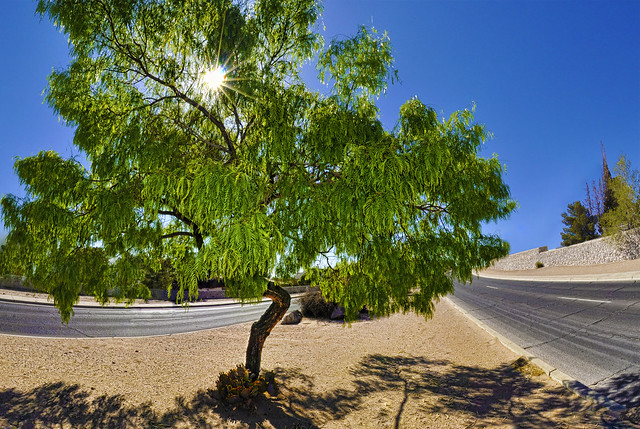 Mesquite Tree Flickr Photo Sharing