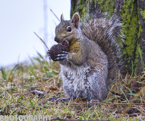 Squirrel at Dinner Time by Ricky L. Jones Photography