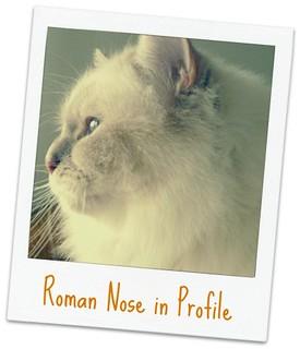 Roman Cat Nose