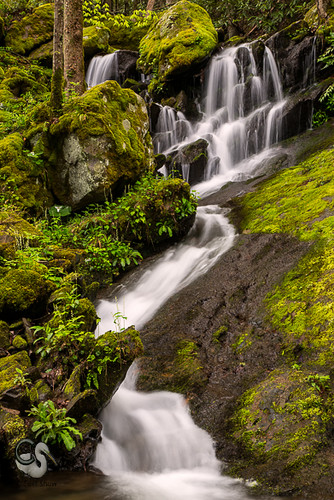 waterfall spring tn tennessee tremont greatsmokymountains canon5dmkiii endlessreach1 carlsshaw carlshawphotography