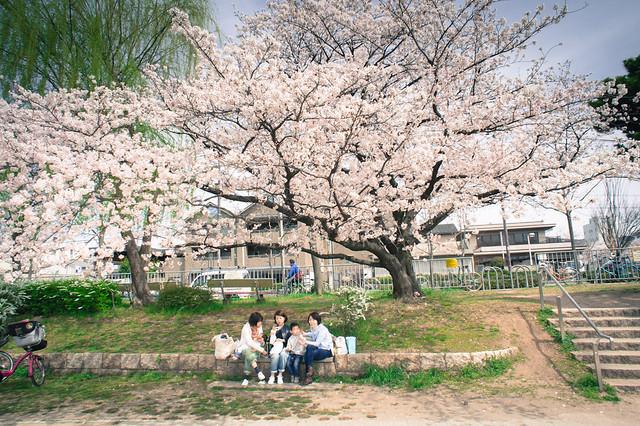 2013.Apr.Kyoto.京都鴨川