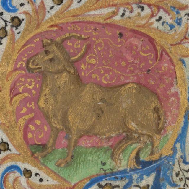 Zodiac sign of TAURUS in a 15th century manuscript
