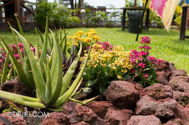 Sentosa Flowers 2013 - Flowers, Arid