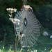 Konigsee-20120918_2476