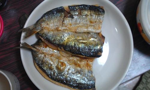 Fish by Kanda Mori