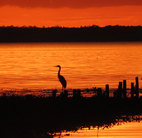CC Sunset with egret