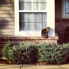 Neighbor of the feline variety.