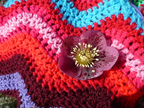 Hellebore and crochet