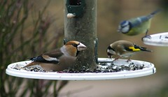 Winter bird feeders 03