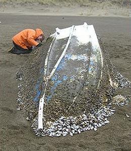 奧勒岡魚類與野生動物學家檢察一搜從日本被沖到林肯市海灘的漁船,2013年2月5日。(照片提供:OFWD)