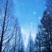 雪舞う by Polotaro
