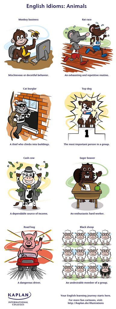 English Idioms - Animals
