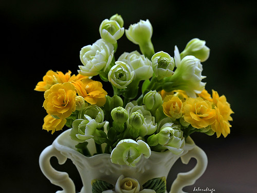 a vase of small flowers...