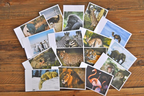 Zoo Animal Cards