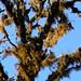 Trees with moss - bosque con musgos; Districto Villa Alta, Región Sierra Juárez, Oaxaca, Mexico por Lon&Queta