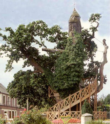 10-most-magnificent-trees-in-the-world-chapel-oak-of-allouville-bellefosse-5