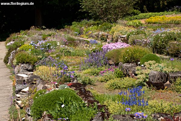 Wunderschön angelegte, terrasierte Steingärten im Sichtungsgarten Weihenstephan