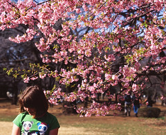 春色の午後