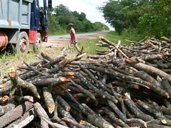logging, wood, tree,