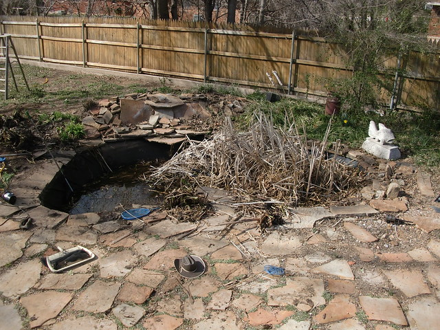 Pond Cleanout (Day 1)