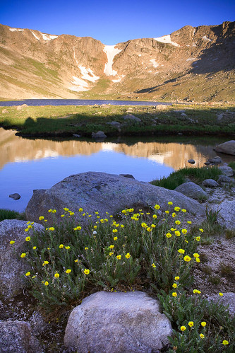 morning flowers blue summer mountains sunrise flora colorado unitedstates lakes evergreen rockymountains ponds waterscapes mountevanswilderness